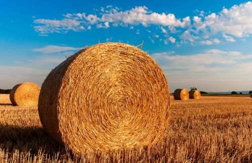 šiaudai, kiškis, Žemdirbystė, vasara, šiaudai, derlius, debesys, šiaudų nuoma