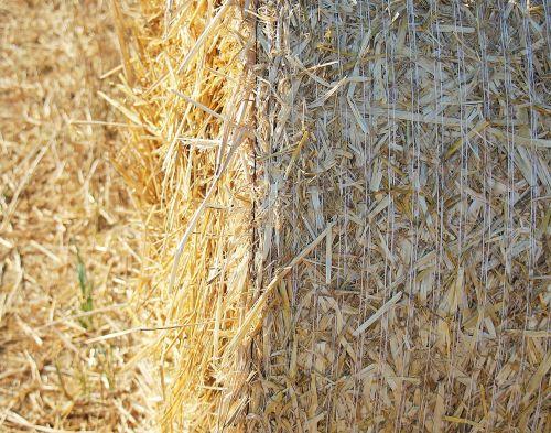šiaudų vaidmuo,derlius,šiaudai,Žemdirbystė,rutuliai,laukas,kiškis,grūdai,derlius,vasara,derliaus metas,sausas,auksinis,gamta,šiaudų derlius,galvijų pašarai,šiaudų dėžė,vaidmuo,kukurūzų laukas
