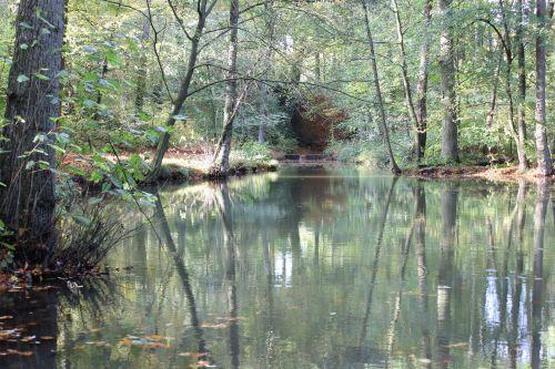 kritimas, miškai, srautas, ruda & nbsp, lapai, upelis rudenį miškai