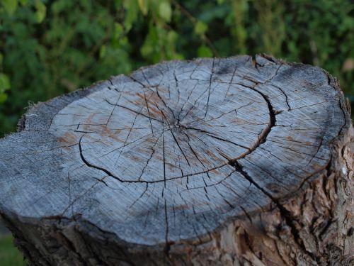 kumpas,denio,medis,tekstūra,blokada,mediena,žiedai