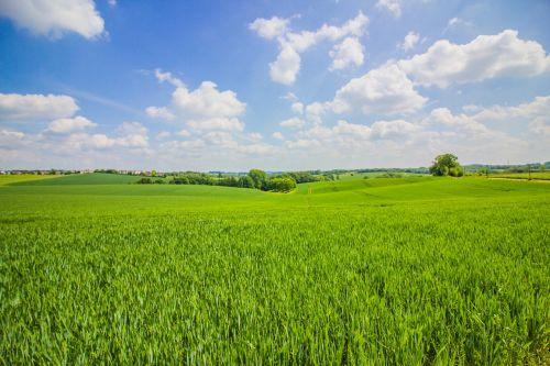 vasara,kraštovaizdis,dangus,debesys,laukai,gamta,žalias,vasaros kraštovaizdis,kraštovaizdžio nuotrauka,žolė,pieva,debesis,mėlynas dangus,mėlynas,vasaros diena,vasaros diena,ratingen,Diuseldorfas