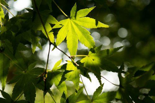 vasara,saulė,saulės šviesa,lapai,medis,tamsi,ray,šviesa,kalnas,žalias