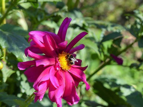 vasara,sodas,gėlė,vabzdys,Uždaryti,flora,gėlių sodas,Sode,botanikos sodas,apdulkinimas