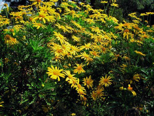 gėlės, rozės, geltona, šviesus, vasaros marios