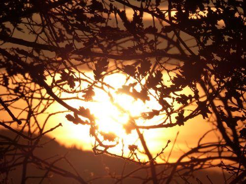 saulė,atgal šviesa,nuotaika,bolidas,siluetai,lapai