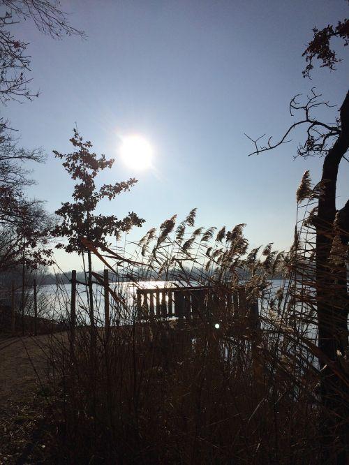 saulė,šešėlis,gamta,šviesa,miškas,krūmas,saulėlydis,medžiai,filialai,ruduo,filialas,lapai,augalas,dangus