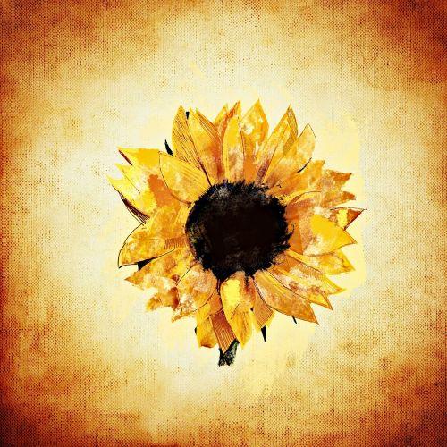 saulės gėlė, vasara, augalas, gėlė, geltona, žiedas, žydėti