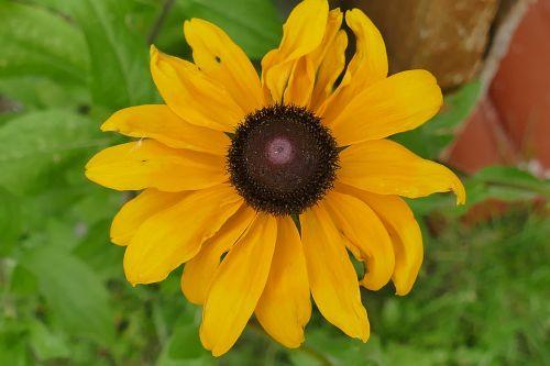 saulės skrybėlė,makro,augalas,gėlė,makrofotografija