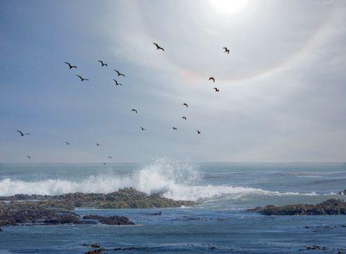 saulės žiedas,Ramusis vandenynas,jūra,vandenynas,dangus,mėlynas,bangos