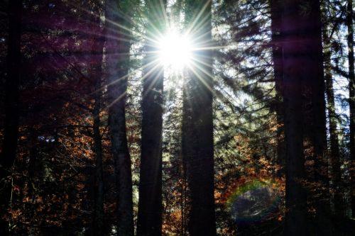 saulės spindulys,saulės šviesa,spinduliai,šviesa,nuotaika,atgal šviesa,gamta,medžiai,saulė,gyventi,jėga,siluetas