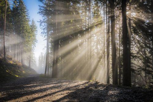 saulės spindulys,saulė,rūkas,dangus,saulėtekis,spinduliai,šviesos efektas,šviesa,rytas,saulės spindulys,atgal šviesa,nuotaika,lichtspiel,kalnai,kraštovaizdis,miškas,ruduo,šviesos spindulys,medžiai