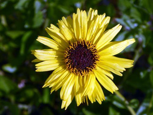 saulėgrąžos, saulėgrąžos, geltona, laimingas, pavasaris, gėlė, gėlės, gėlių, klaida, klaidas, vabzdžiai, vasara, saulėgrąžos ir klaidos