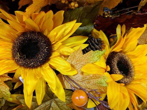 saulėgrąžos, saulėgrąžos, gėlė, gėlės, geltona, gėlių, kritimas, saulėgrąžos