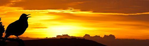 saulėtekis,paukštis,juoda paukštis,siluetas,juoda,gražus,oranžinė,saulė,kraštovaizdis,šviesa,gamta,dangus,horizontas,debesis,dramatiškas,aukštas,fotografija,dainuoti