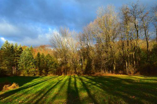 saulėtekis,dienos šviesa,šešėliai,medžiai,gamta,žolė,kraštovaizdis,šviesa,žalias,natūralus,ruduo,kritimas,geltona,lapkritis,šviesus,spalvinga,rudens,rytas,saulės šviesa,debesys