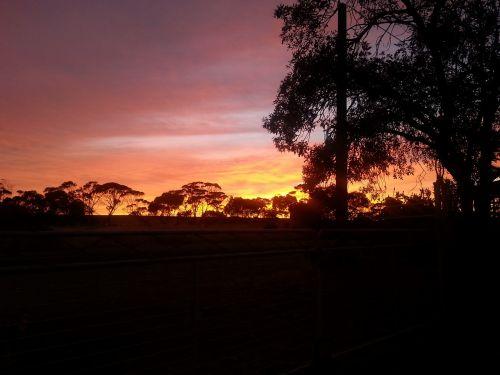 saulėtekis,oranžinė,siluetas,saulė,dangus,gamta,kraštovaizdis,medis,lauke,horizontas,spalva