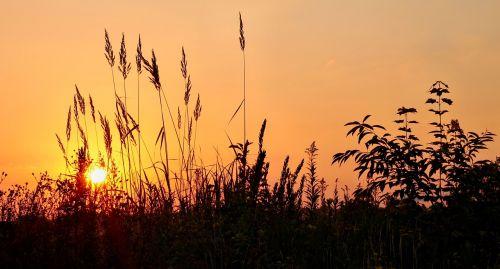 saulėtekis,žolė,nuotaika,dangus,gamta,morgenstimmung,rytas,atmosfera,žolės,debesys,atgal šviesa,romantiškas,oranžinė,geltona,idilija