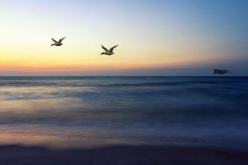 saulėtekio skrydis,eina namo,paukščiai,dangus,gamta,skraidantis,skristi,lauke,taika,skrydis,oras,aišku,uodega,laukiniai,saulėtekis,aplinka,plunksna,skleisti,simbolis,viltis,laisvė,skleisti,tobulybė,viltingas,mėlynas,dvasia,oras,elegancija,malonė,gradientas,vandenynas,vanduo,vandens šlaitas,putos,bangos,šviesa,gražus,nuostabus,ankstus rytas,Krantas,Džersio krantas,Grynumas,grakštus