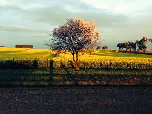 saulėlydis,audra,dangus,kraštovaizdis,spalva,sezonas,grazus krastovaizdis