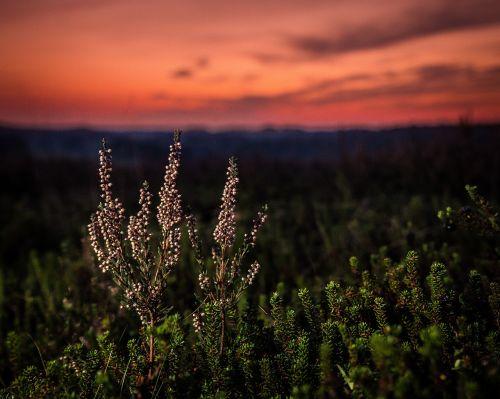Saulėlydis, Natūralus, Ro, Dangus, Kraštovaizdis, Tyla, Virėja, Vaizdas, Led Ežeras, Viborgas, Denmark