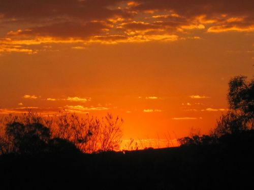 saulėlydis,oranžinis auksas,gyvas,šviesus,šviesus,debesys,šviesa,švytėjimas,medžiai,dangus