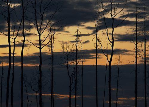 saulėlydis,vaizdingas,kraštovaizdis,medžiai,be lapų,dangus,debesys,dusk,twilight,vakaras,siluetai,taikus,ramus,ramus,gamta,ramus