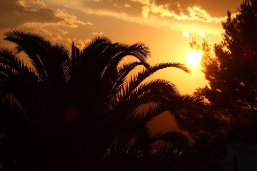 saulėlydis,delnas,šventė,medis,tropikai,sala,karštas,rojus,vasara,dangus,zen,karibai,debesis,Gvadelupa,atogrąžų,gamta,martinique,lapai