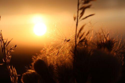 saulėlydis,ruduo,Gereide,vakarinis dangus,aukso ruduo,grūdai
