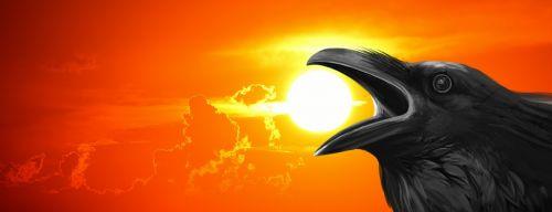 saulėlydis,Varnas,varna,vejos paukštis,naktis,švytėjimas,dangus