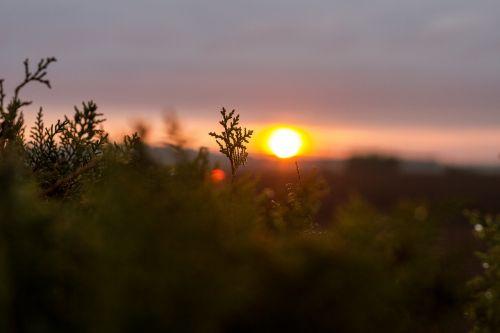 saulėlydis,kraštovaizdis,gamta,spalvos,vakare,naktiniai žiburiai,naktį,vengrija,dangus,dusk,vasara,žibintai,nuotaika,natiurmortas,švytėjimas