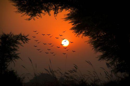 saulėlydis, saulė, dusk, aušra, siluetas, kaimo saulėlydis, kelio saulėlydis, saulėlydžio paukštis, raudonas saulėlydis, gražus saulėlydis, saulėlydžio siluetas, pakistano saulėlydis, punjab saulėlydis, paukščių saulėlydis, naktiniai paukščiai, kraujo saulėlydis, aplinka, dangus, spalva, medis, be honoraro mokesčio