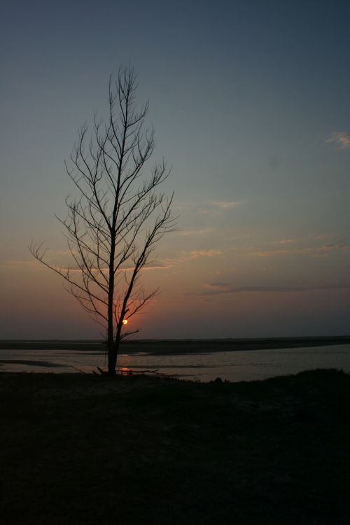 saulėlydis,medis,dusk