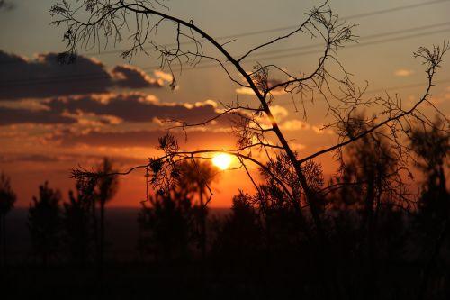 saulėlydis,kraštovaizdis,natūralus,bolidas,filialas,medis