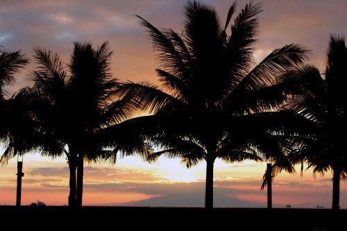 saulėlydis, apsvaiginimo & nbsp, saulėlydis, gražus & nbsp, saulėlydis, vandenynas, jūra, apmąstymai, šešėlis, kokoso & nbsp, medis, saulėlydis Manilos įlankoje 4