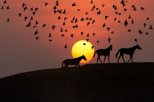 saulėlydis,kraštovaizdis,paukščio siluetas,arklių siluetas,siluetas,dangus,saulė,skraidantis,laukinė gamta,lauke,laukiniai,vaizdingas