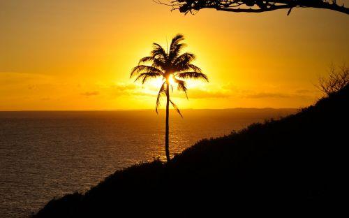 saulės šviesa,saulė,vasara,laimingas,geltona,saulės šviesa,laimė,laisvė,kraštovaizdis,šviesa,gyvenimo būdas,dangus,saulėlydis,kelionė,saulėtekis