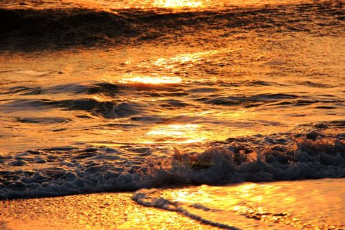 naršyti,banga,jūra,vandenynas,vasara,vanduo,papludimys,vandenynų banga,vandens banga,atogrąžų,atostogos,gamta,bangų vektorius,rojus,bangos vektorius,purslų,lauke,kelionė,kranto,saulėtas,paplūdimio linksmas,pakrantė,šventė,laisvalaikis