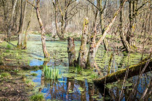 pelkė,pelkės,pelkė,vanduo,gamtos rezervatas,pelkėtas,žolė,žolės,gamtos apsauga,šlapynes,pelkė žolė