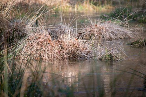 pelkė žolė,žolė,kiauras,pelkė,žolės,pelkė,Moorland,vanduo,drėgnas,pelkės,pelkėtas