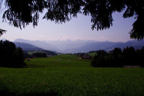 Šveicarija, swiss, kalnai, peizažas, vasara, medžiai, pušys, Šveicarijos peizažas
