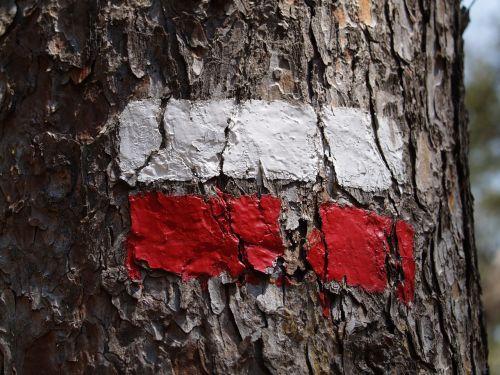 žyma,mediena,vėliava,raudona,balta,kelionė,etiketė,turistinis,medis,kelionė,kelionė