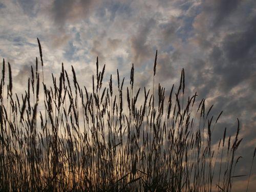 žolė, aukšta & nbsp, žolė, saulėtekis, dangus, debesys, dramos, dramatiškas, laukas, gamta, vasara, aukšta žolė saulėtekis