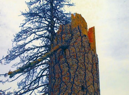 medis, medžiai, medis & nbsp, bagažinė, bagažinė, vertikaliai & nbsp, bagažinė, miręs & nbsp, medis, plikas & nbsp, medis, miškas, gamta, lauke, Laisvas, viešasis & nbsp, domenas, aukšta medžio kamieno