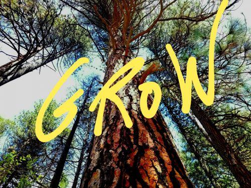 augti, augimas, įkvėpimas, sakydamas, medžiai, mintis, žodžiai, aukštas treetake ir žodžiai