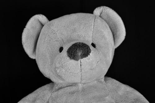 Teddy,meškiukas,minkštas žaislas,iškamša,portretas,minkštas,Uždaryti