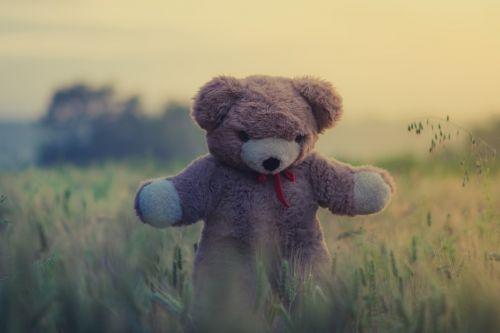 meškiukas,žaislas,vaikas,vaikas,laukas,žolė,augalai