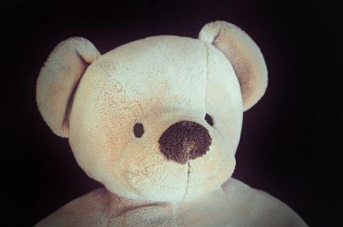 meškiukas,Teddy,minkštas,minkštas žaislas,iškamša,portretas,Retro išvaizda,izoliuotas,Uždaryti