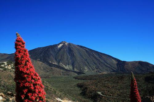 Teide nacionalinis parkas,tajinaste rojo,raudonos gėlės,Tenerifė,Nacionalinis parkas,Kanarų salos,nacionalinis parkas teide,teide,tajinaste