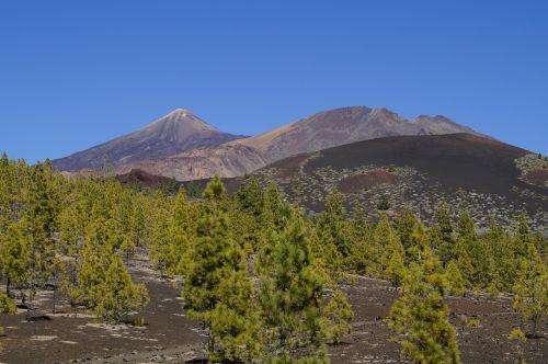 Teide nacionalinis parkas,Nacionalinis parkas,Rokas,uolienos formacijos,Tenerifė,Kanarų salos,teide,nacionalinis parkas teide,Ispanija,gamta,kalnas,vulkanas,kraštovaizdis,žygis,užteršimas,Karg,vulkaninis kraštovaizdis,sustiprinta lava,lava,lava rock,vulkaninis uolas,šaltas,vulkaninis,nusmukęs,lavos srautas,vulkanizmas,aukščiausių kalnų,nerealu,Kanarų pušis,pušis,šviesus,žalias,kontrastas,pinus canariensis,Kanarų salų pušis,endeminis,pino canario