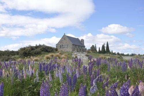 tekapo,Naujoji Zelandija,bažnyčia,lupinai,akmens bažnyčia,gėlės,grazi bažnyčia,Vestuvės,bažnyčia ant kalvos